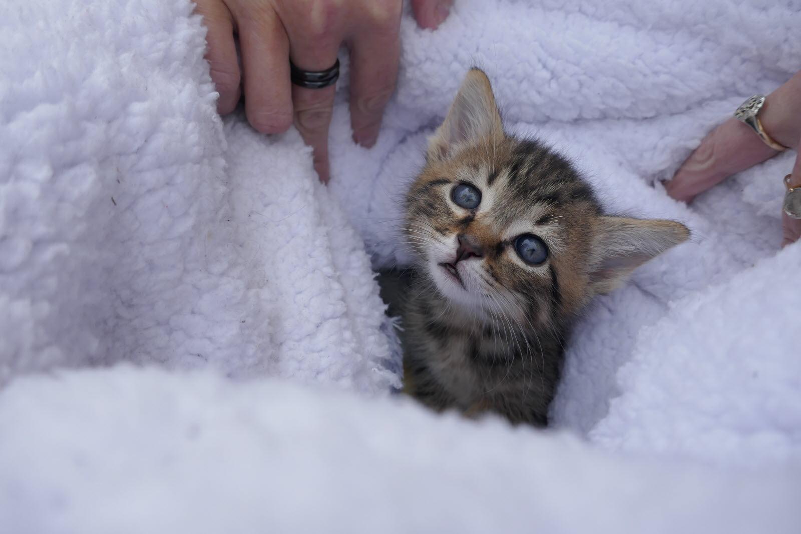 Blog animaux : que faire si on trouve un chaton nouveau-né ?